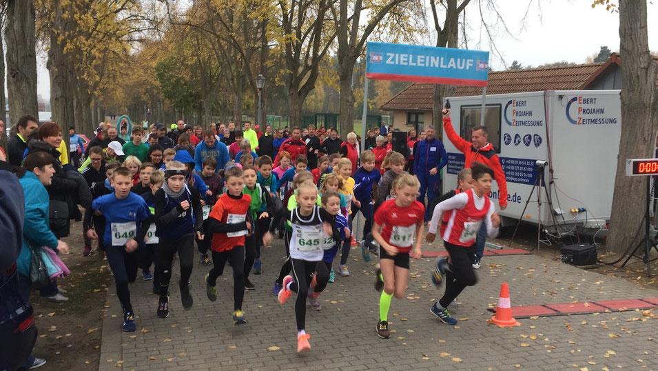 Beim Altmarklauf in Osterburg ist die Schülerstrecke 1000 Meter lang. Foto: Alpha-Report