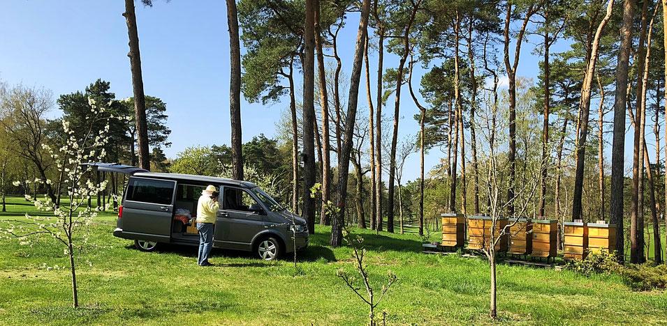 Bienenvölker auf den Land- und Golfclub Berlin Wannsee