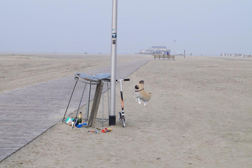 Ein Mops mit heißer Luft am Strand in SPO