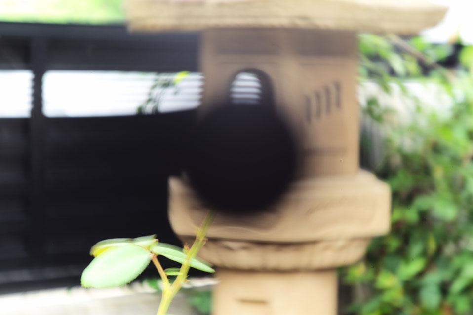 ライカタンバールM F2.2/90mm  センタースポットフィルター有無の画像比較  Leica Thambar M F2.2/90mm  Center spot filter on or off Check Out