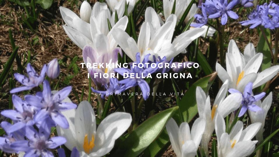 Delphicaphoto Trekking fotografico Valsassina - Fiori della Grigna