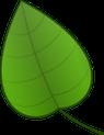 boom en blad herkennen