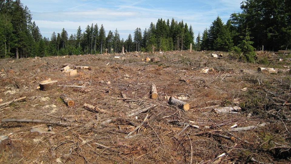 Aux arbres citoyens ! Aidez les forestiers à défendre vos forêts Image