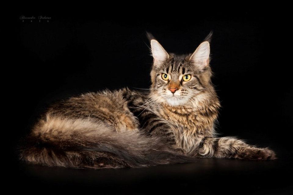 кто поздравления с кошками мейн-кун его столешницей закрепляют