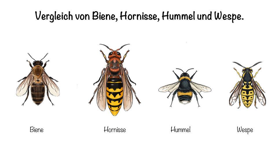 Bienen / Wespen /Hornissen - Feuerwehr Adliswil