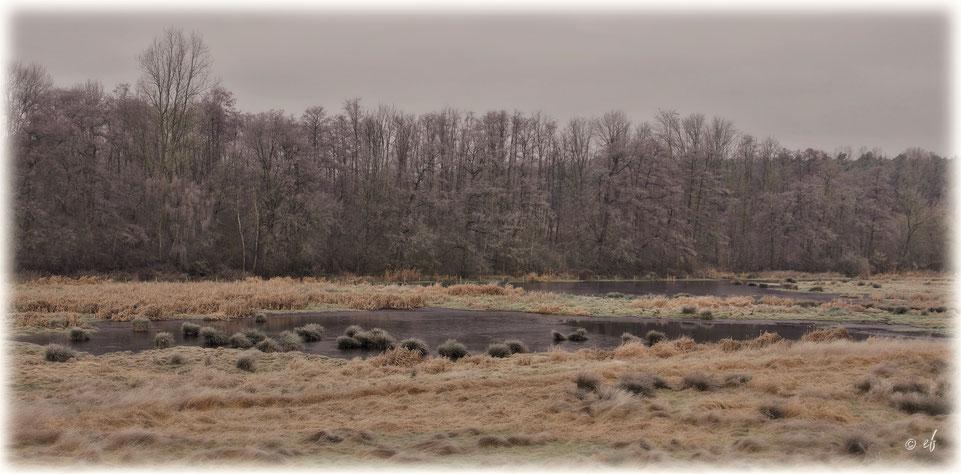 Feuchtwiesen im Winter