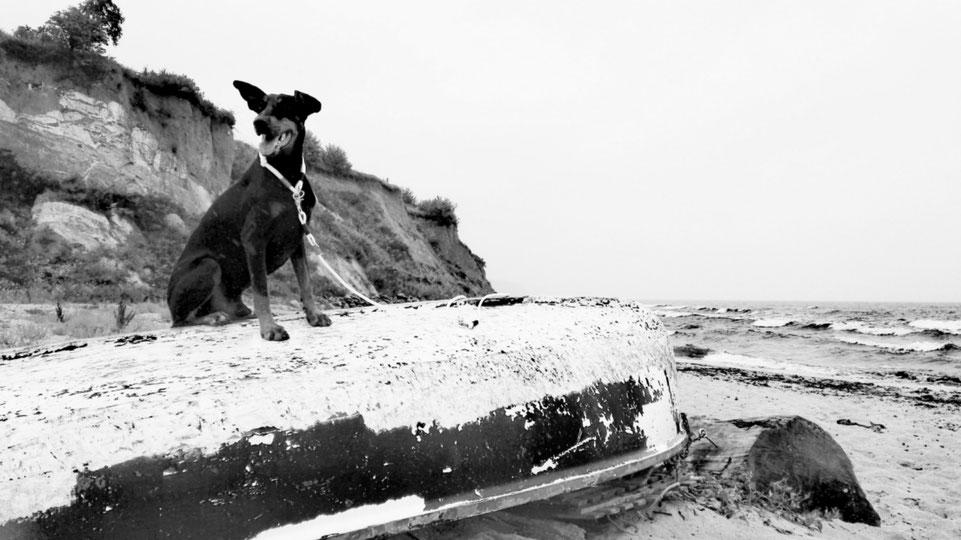 Hundeleinen aus Segeltau Ostseeinsel Ruegen