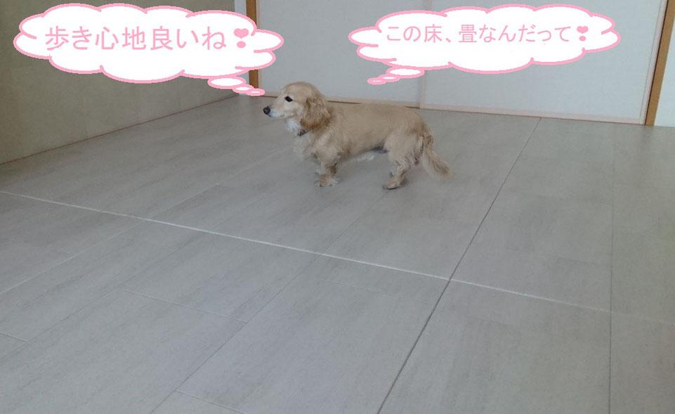 この床は、畳です。【リフォーム畳®】です。水拭き掃除が出来ます。