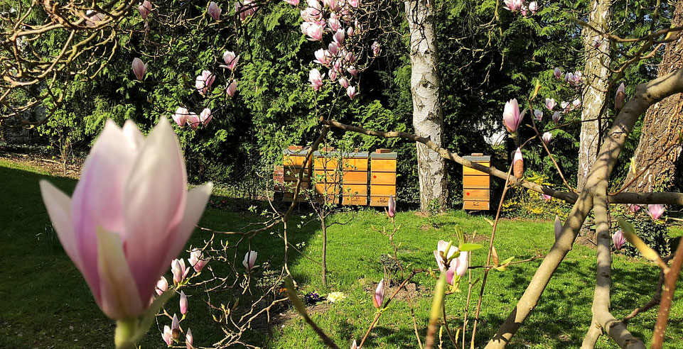 Bienenvölker in Berlin Frohnau