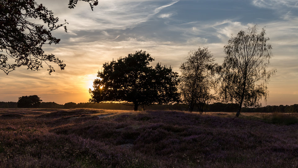 Sunset at Pietzmoor