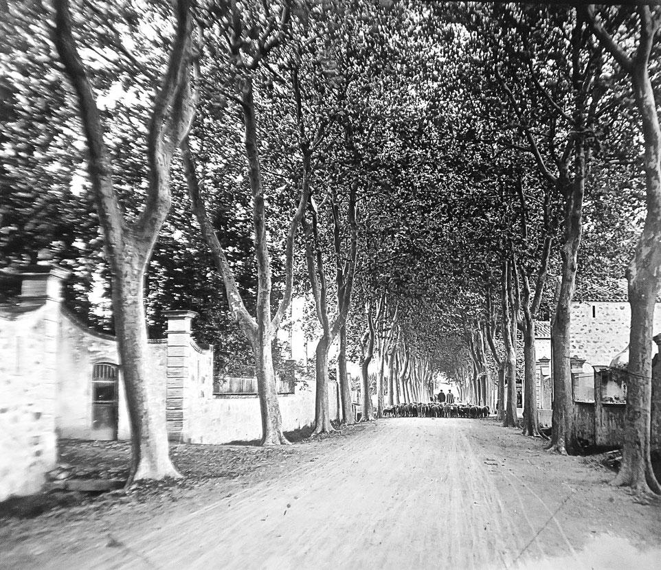 berger 1909