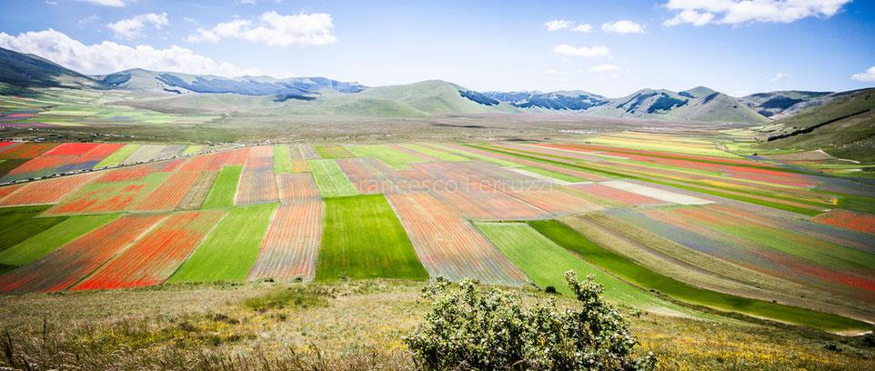 la fioritura dei campi coltivati a castelluccio di norcia