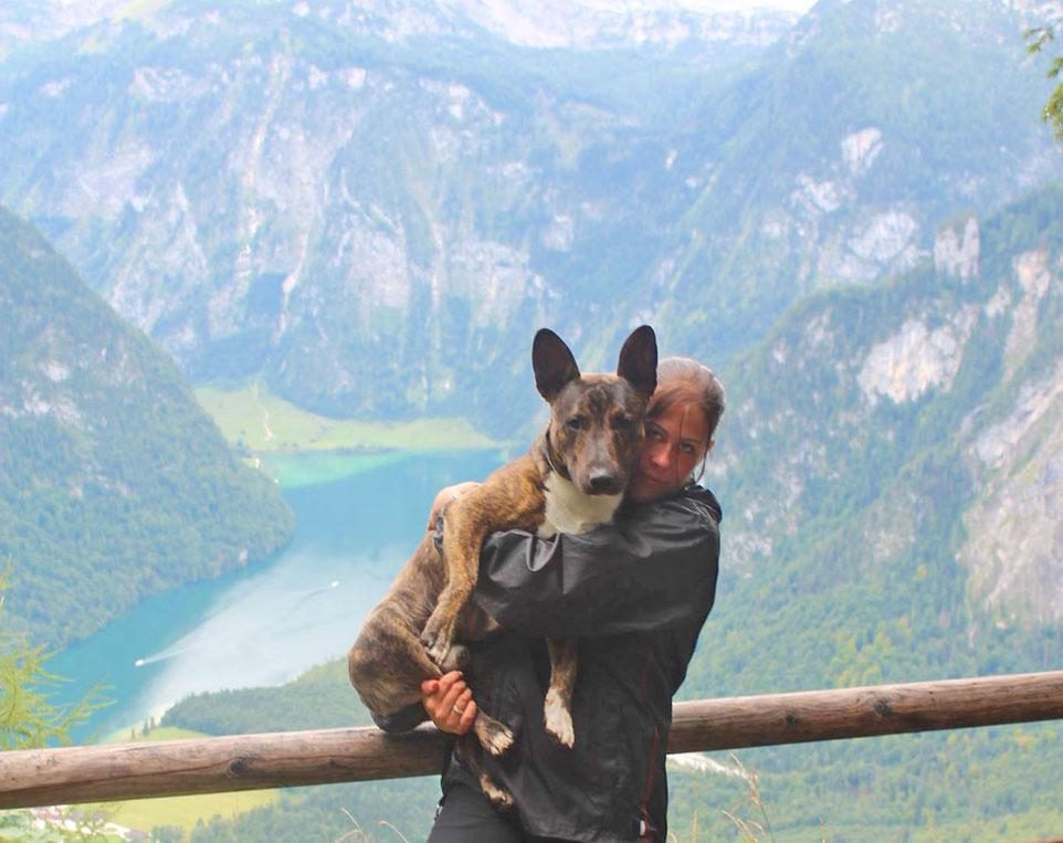 Wandern mit Hund, wandern mit Kampfhunden