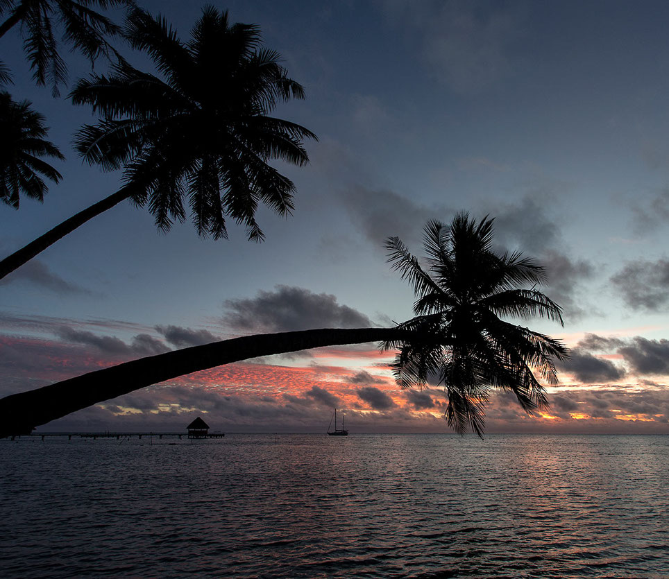 Beautiful sunset, Palm trees and a ailing boat with read clouds, romantic Bora Bora, South Pacific, French Polynesia, 1280x1109px