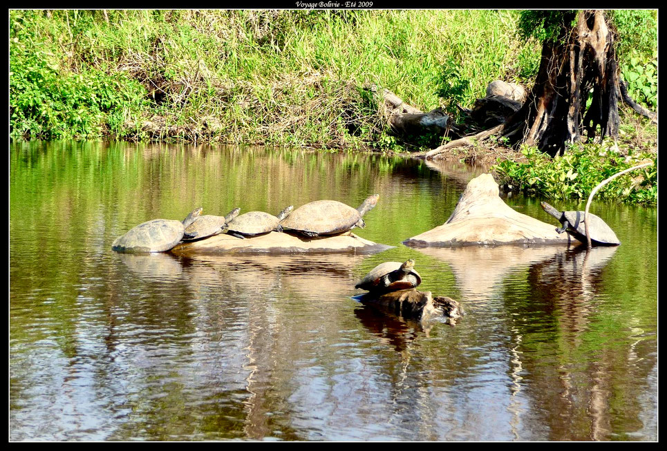 """© Guillaume Deschanel - Amazonie - Faune dans le parc """"Pampa Del Yacuma"""""""