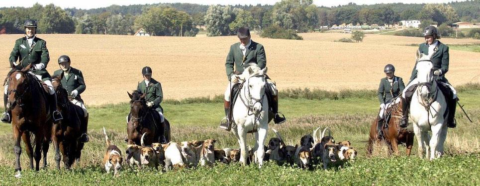 Meutearbeit an den Hunden.  Foto: Manja Elsässer