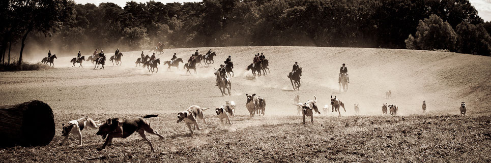 Die Foxhounds folgen auf der gelegten Duftspur.  Foto: Kai Ohl