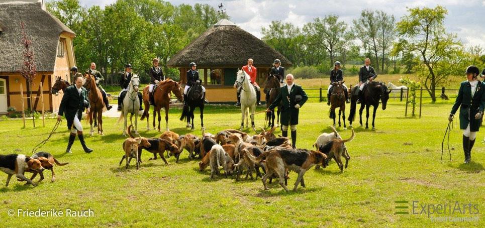 Nach der Jagd. Das Curée für die Hunde auf dem Tegelhof Rügen. Foto: Friederike Rauch