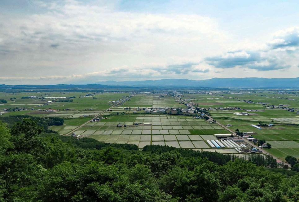 東川町の水田一望