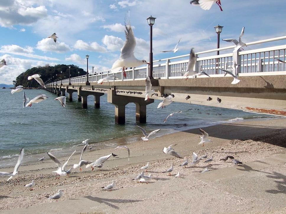 毎年冬になると渡り鳥のユリカモメで賑やか。寒い時期の竹島も良い雰囲気