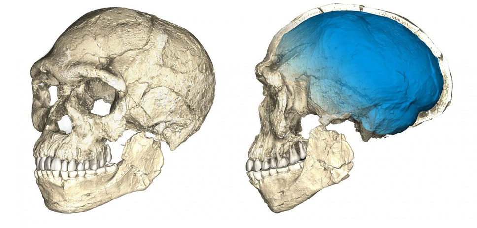 These are two views of a composite reconstruction of the earliest known Homo sapiens fossils from Jebel Irhoud (Morocco) based on micro computed tomographic scans of multiple original fossils.* See below for complete explanation. Credit: Philipp Gunz, MPI