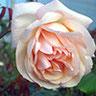 Rose Nabonnand