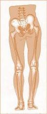 inégalité de longueur, jambe courte