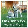 Facebook, Hakucho no Yama Ken, Sabine Lüders, Japan Akita, Zucht, Hund, Akita Welpen