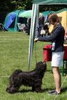 BOB Beelitz 2013 Tibet Terrier Gyelpo Gismar von Ma-ka-zie