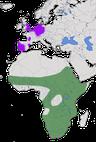 Karte zur Verbreitung der Gattung Alopochen