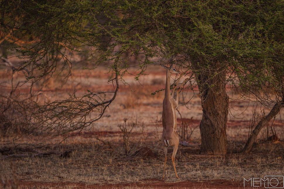 safari-impressionen kenia