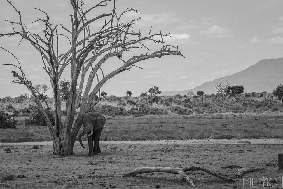 afrika, kenia, elefant, monochrom, landschaft