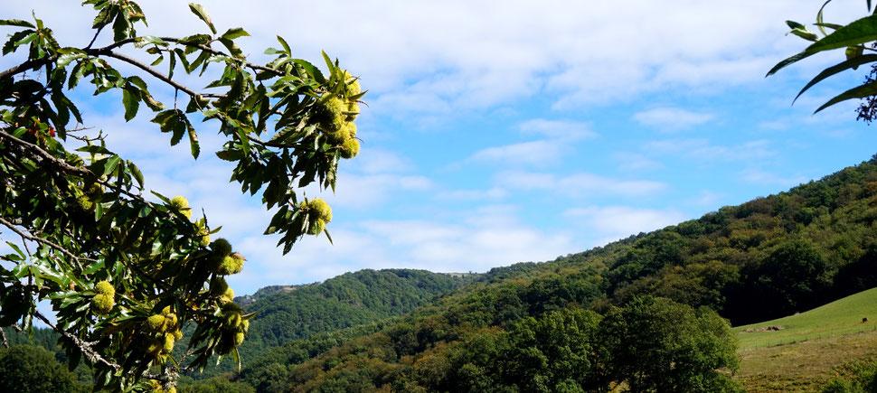 Début d'automne aux environs de La Rousselie