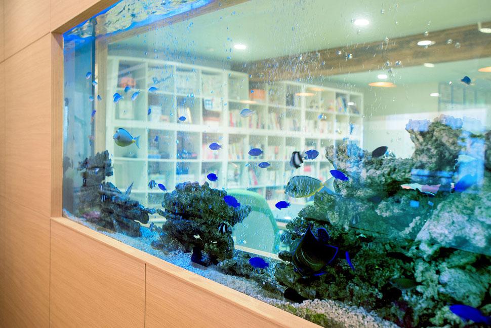 企業様に設置した海水魚水槽
