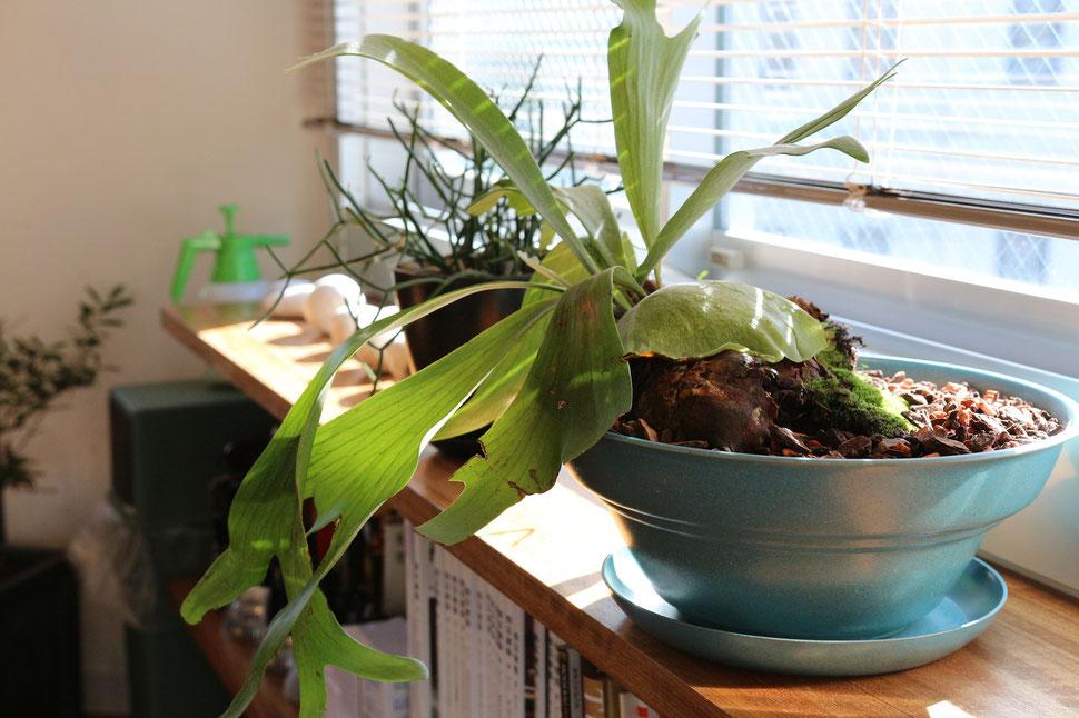 観葉植物と水槽の類似関係