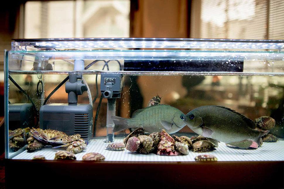 メジナやワタリガニ、アワビを元気にストック出来る活魚水槽