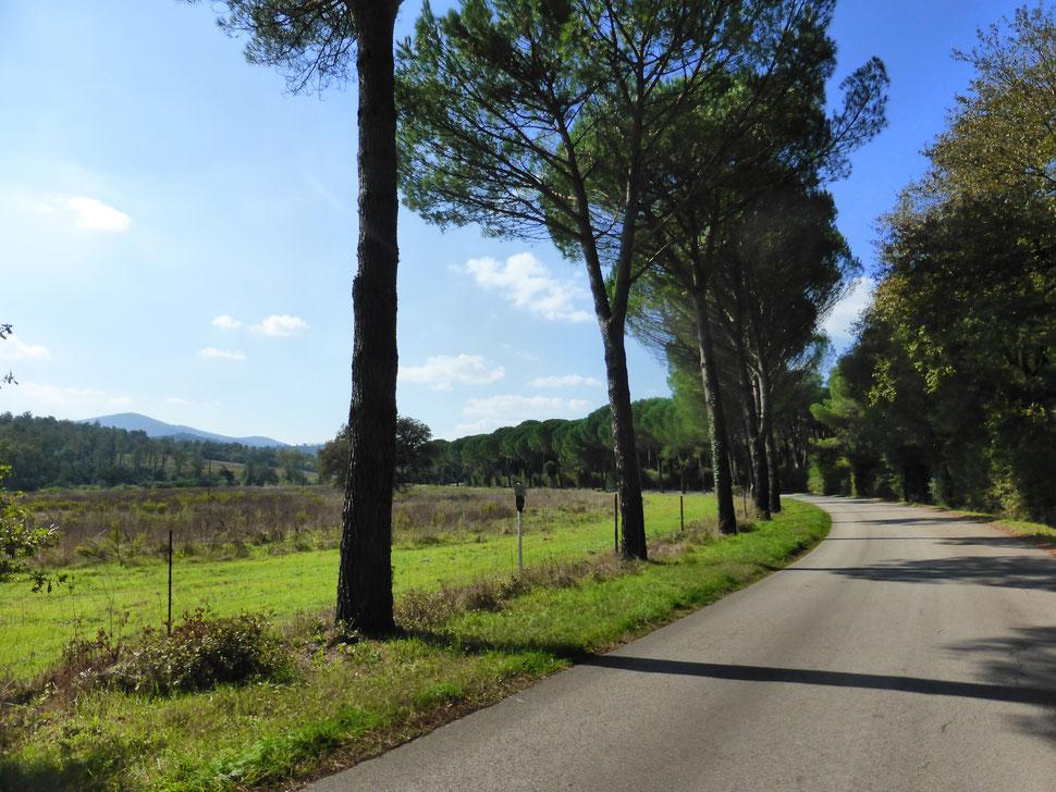 Urlaub, E-Bike und Toskana heißt: Wir fahren zu den schönsten Alleen!