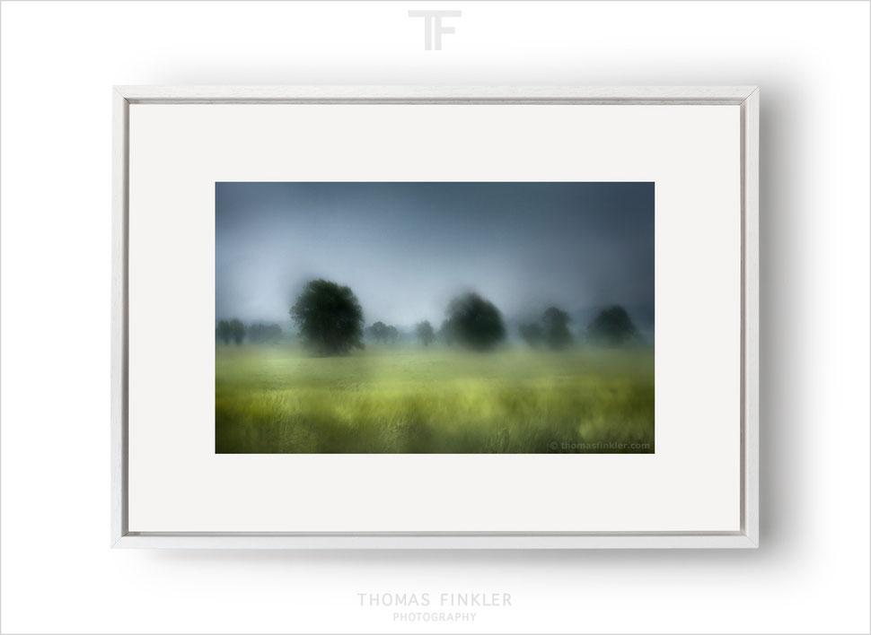 Fine art, photography, print, tree, nature, landscape, trees, atmospheric, impressionist, art, prints for sale, buy prints, limited edition