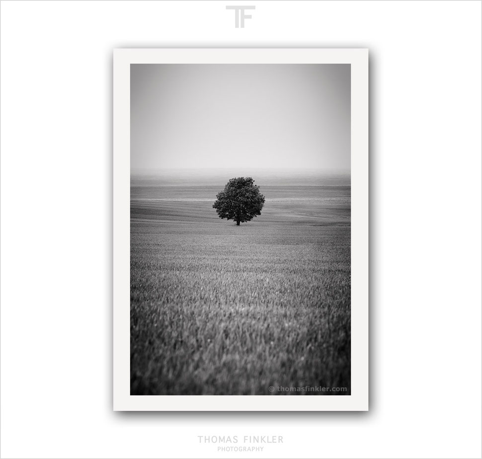 Fine art, photography, print, black and white, monochrome, tree of life, single tree, minimal, minimalist, art, prints for sale, buy prints