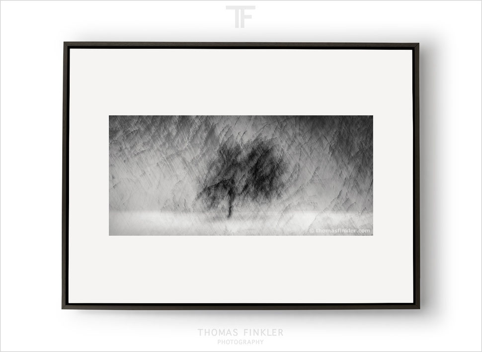 Fine art, photography, print, black and white, abstract, tree, single tree, solitary tree, art, prints for sale, buy prints, limited edition
