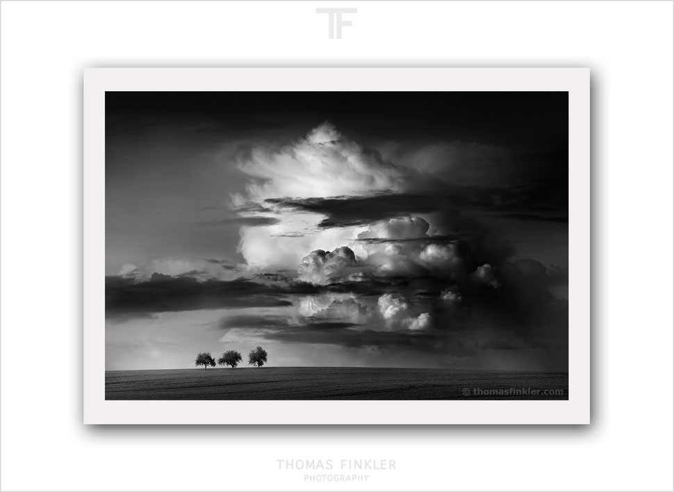 Fine art photography, art photography, photographic art, black and white, monochrome, nature, landscape, trees, limited edition, online