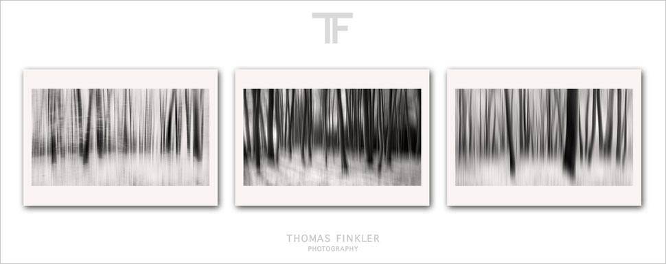 Photography, fine art, monochrome, 3 piece wall art, abstract, nature, forest, trees, woodland, wood, art, archival, prints, for sale, online