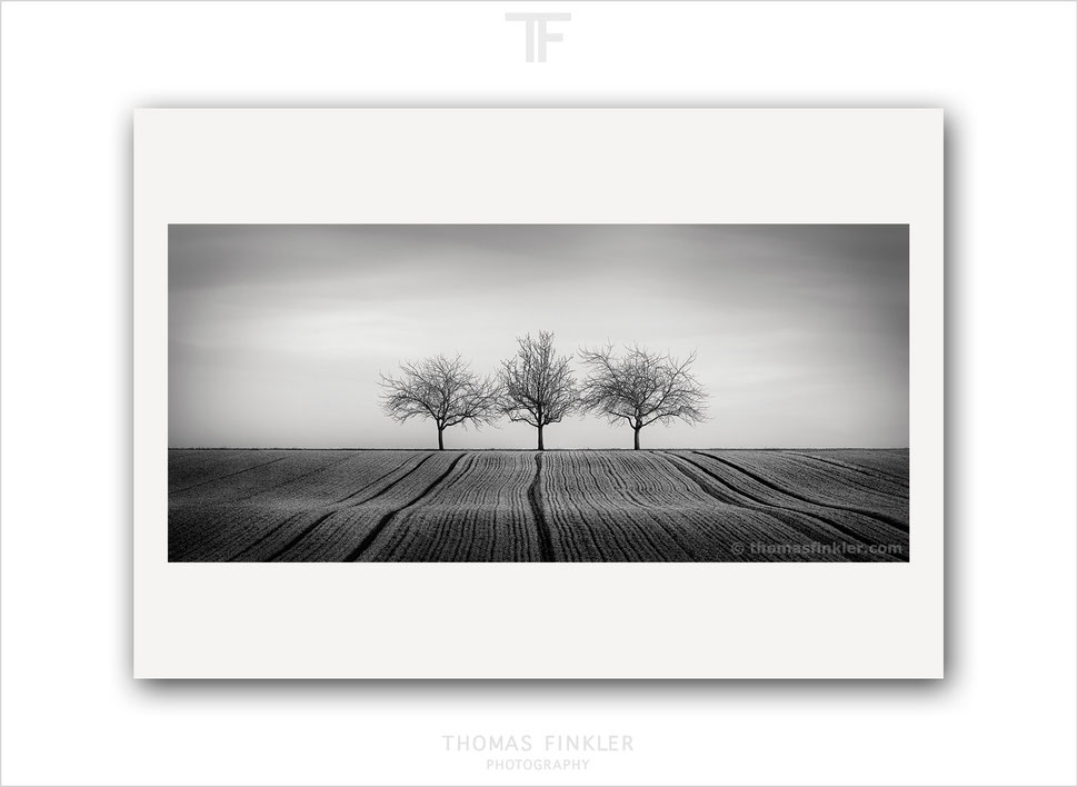 Fine art, photography, print, black and white, monochrome, tree, nature, landscape, trees, art, prints for sale, buy prints, limited edition