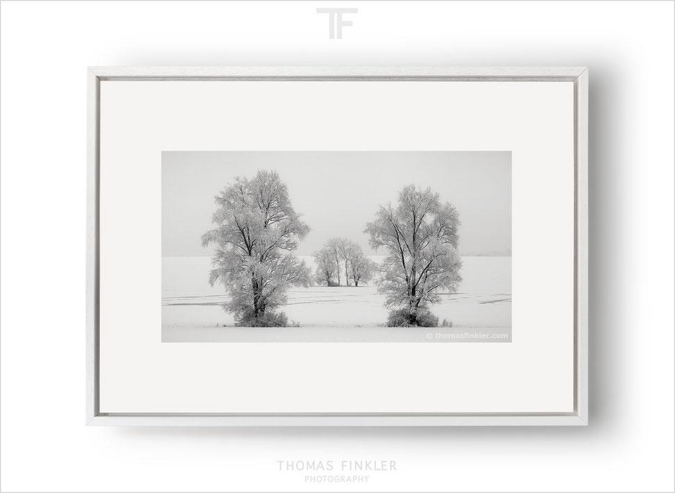 Fine art, photography, print, black and white, monochrome, tree, nature, landscape, trees, snow, winter, prints for sale, buy prints, online