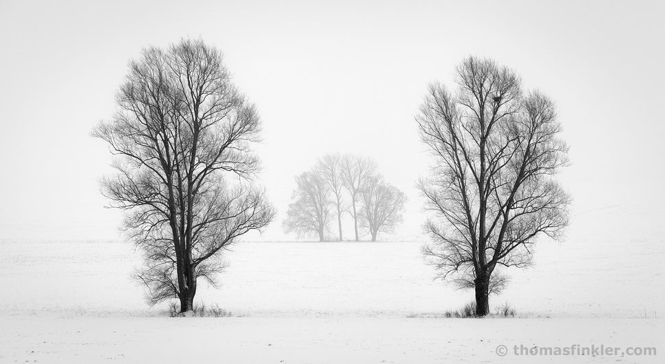 Fine art photography, black and white, landscape, wall art, minimalist, trees, misty, winter, snow, poetic, calming, silence, prints, for sale