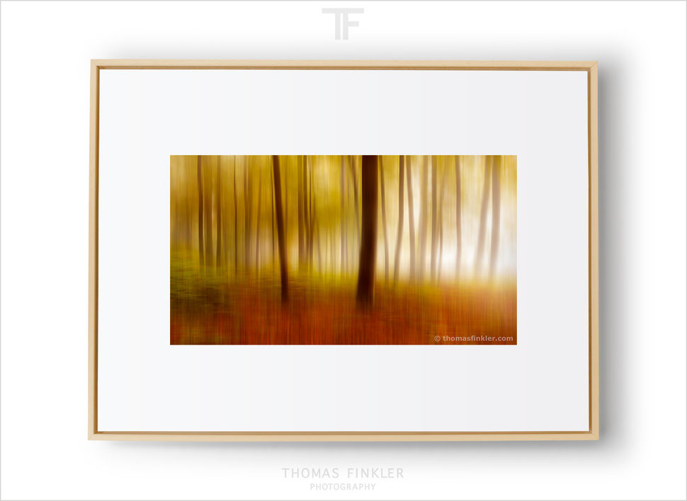Fine art abstract nature photography, fine art photography prints, wall art, photo art, autumn colors, blurry trees, forest, seasons