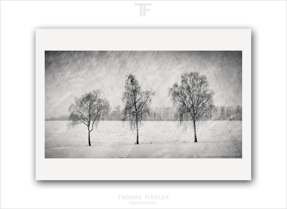 Fine art, photography, black and white, monochrome, landscape, tree, nature, trees, winter, snow, art, limited edition, series, online