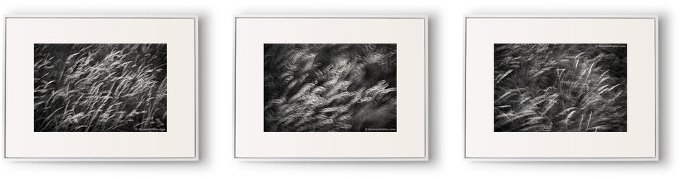 Fine art photography, black and white, nature, abstract, 3 piece wall art, triptych, grasses, blurry, monochrome, framed, prints, for sale