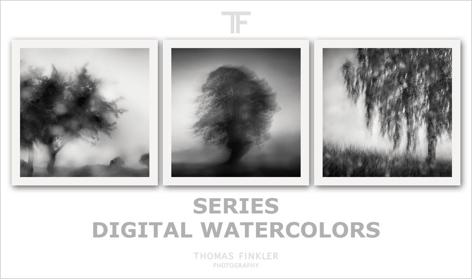 Fine art, photography, black and white, monochrome, abstract, nature, trees, impressionist, atmospheric, series, limited edition
