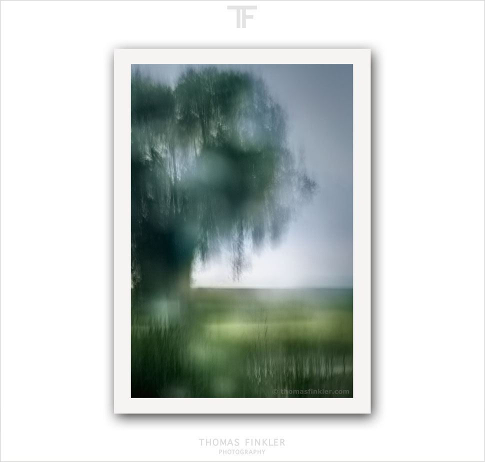 Art, fine art, photography, print, abstract, nature, atmospheric, impressionist, blurry, poetic, tree, prints for sale, buy prints, online